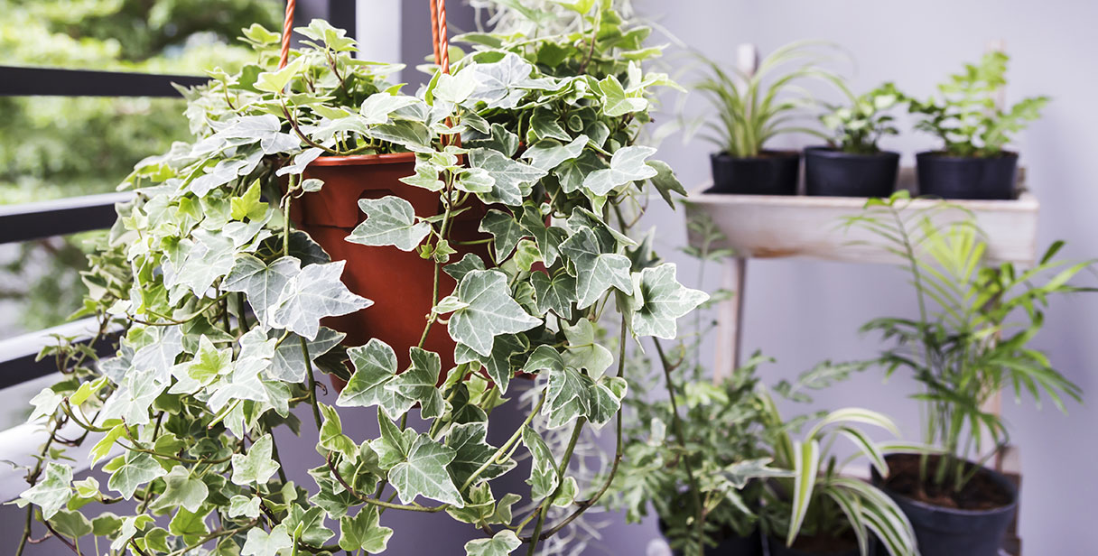 Ivy Screens and Instant Hedging